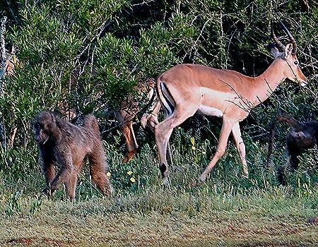 221. 010418Maputo, Mozambique & Kruger Nat Park, South Africa