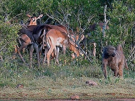 222. 010418Maputo, Mozambique & Kruger Nat Park, South Africa