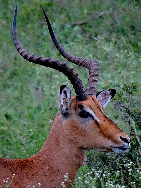 222. Kruger Nat Park, South Africa