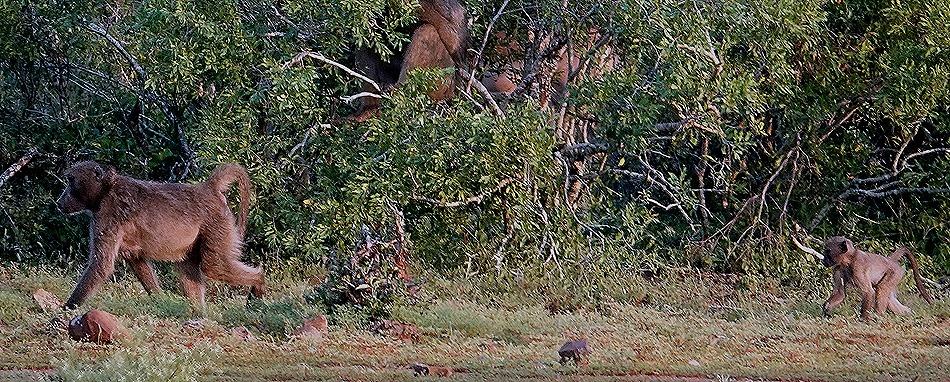 224. 010418Maputo, Mozambique & Kruger Nat Park, South Africa