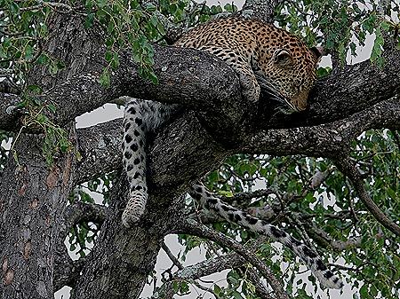 225. Kruger Nat Park, South Africa