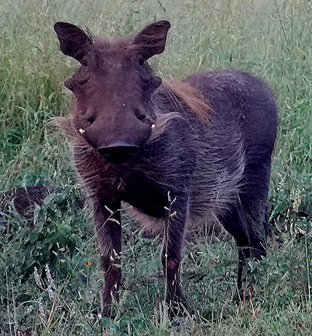 23. Kruger Nat Park, South Africa