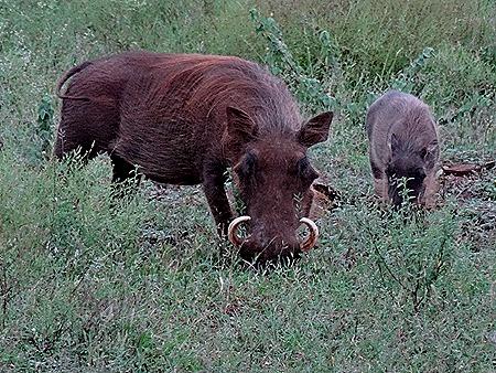 233. Kruger Nat Park, South Africa