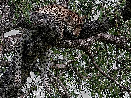 239. Kruger Nat Park, South Africa