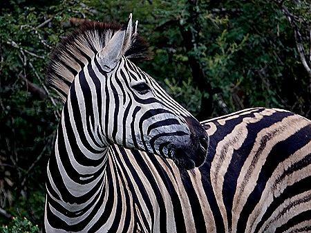 24. Kruger Nat Park, South Africa