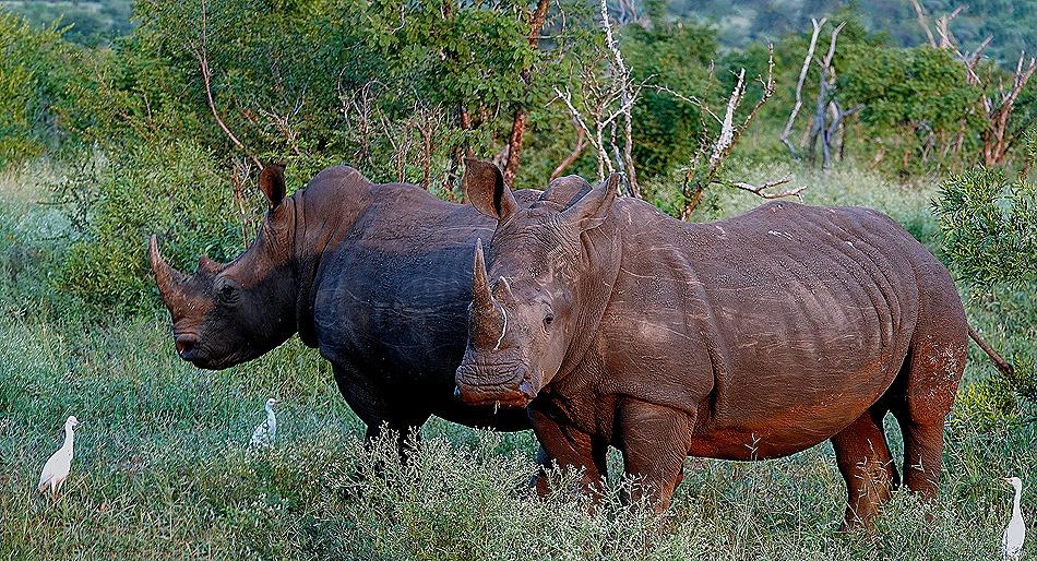 240a. 010418Maputo, Mozambique & Kruger Nat Park, South Africa_stitch