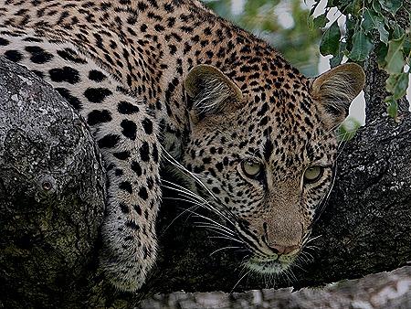 241. Kruger Nat Park, South Africa