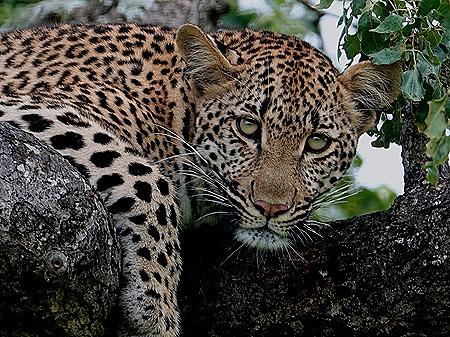 242. Kruger Nat Park, South Africa