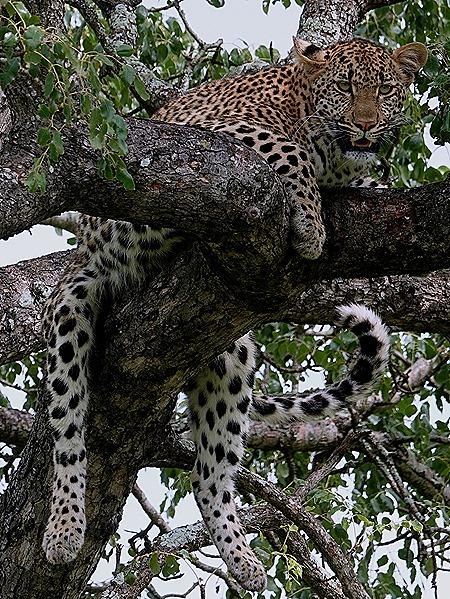 248. Kruger Nat Park, South Africa