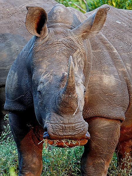 250. 010418Maputo, Mozambique & Kruger Nat Park, South Africa
