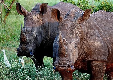 251. 010418Maputo, Mozambique & Kruger Nat Park, South Africa