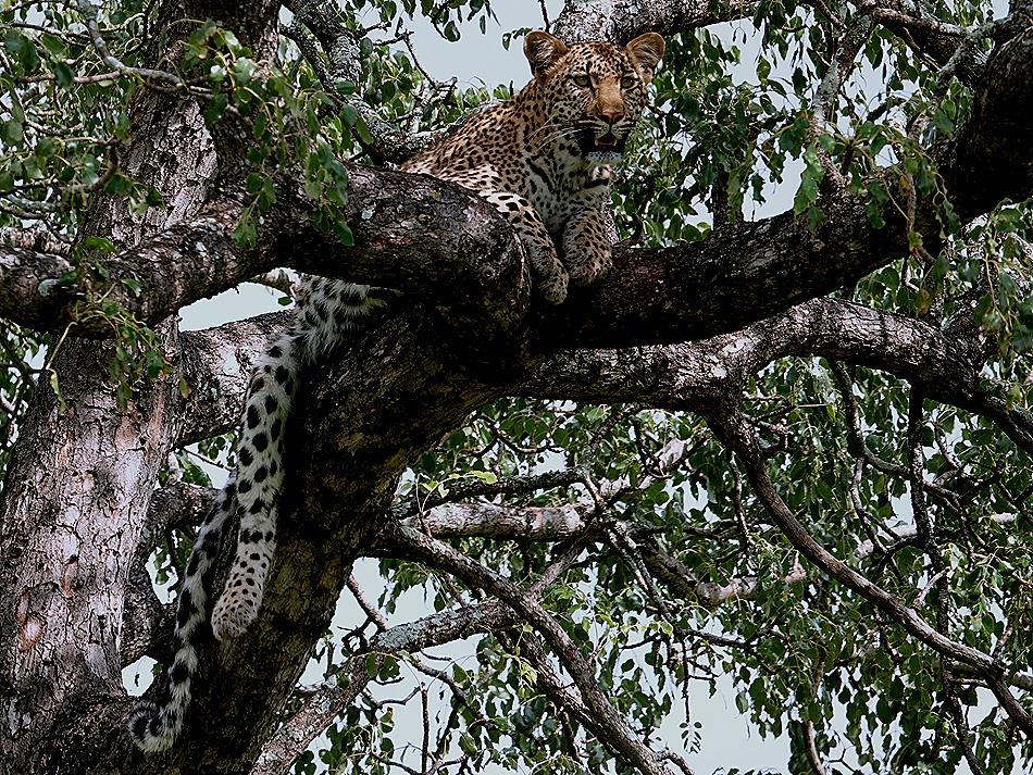 256. Kruger Nat Park, South Africa