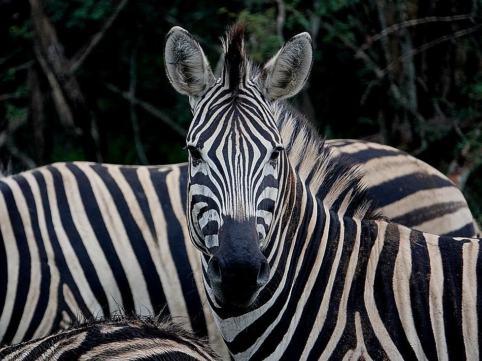 26. Kruger Nat Park, South Africa