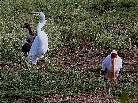 263. Kruger Nat Park, South Africa