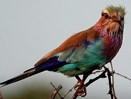 266. 010418Maputo, Mozambique & Kruger Nat Park, South Africa