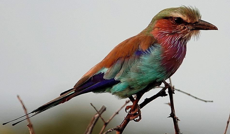 268. 010418Maputo, Mozambique & Kruger Nat Park, South Africa