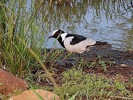 270. Kruger Nat Park, South Africa