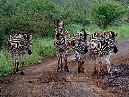 272. Kruger Nat Park, South Africa