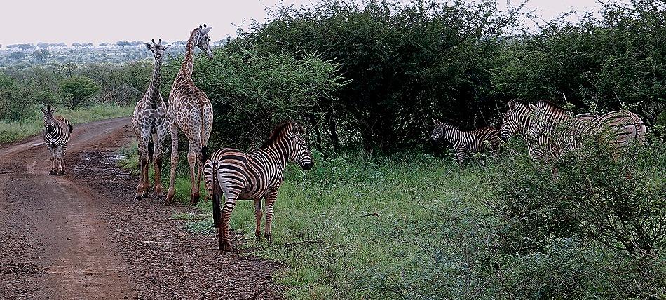 274. Kruger Nat Park, South Africa