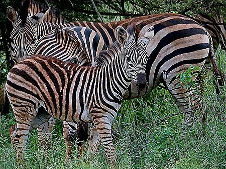 276. Kruger Nat Park, South Africa