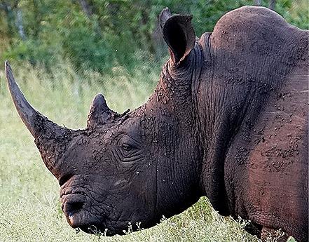 277. 010418Maputo, Mozambique & Kruger Nat Park, South Africa