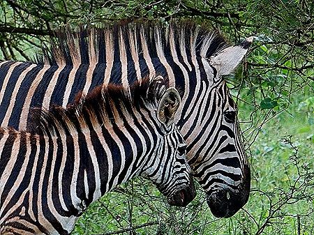 277. Kruger Nat Park, South Africa
