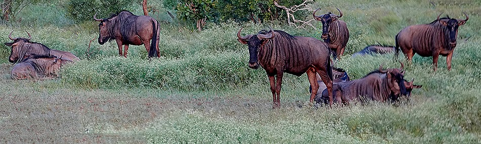 278a. 010418Maputo, Mozambique & Kruger Nat Park, South Africa_stitch
