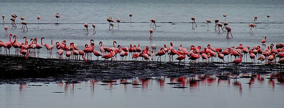 27a. Walvis Bay, Namibia080418_stitch