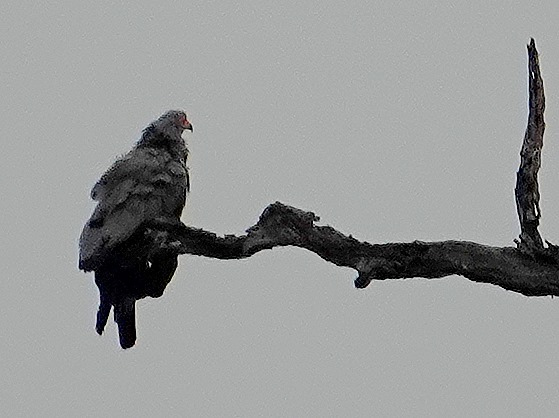 28. Kruger Nat Park, South Africa