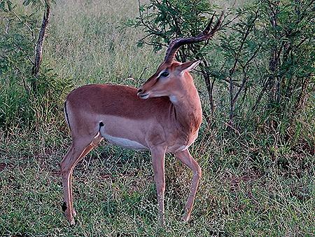 284. Kruger Nat Park, South Africa