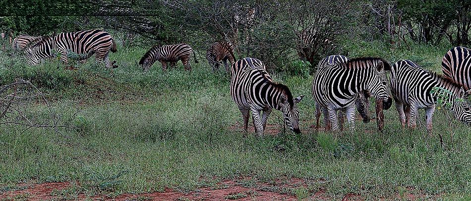 284a. Kruger Nat Park, South Africa_stitch