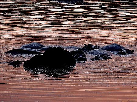 28a. Kruger Nat Park, South Africa