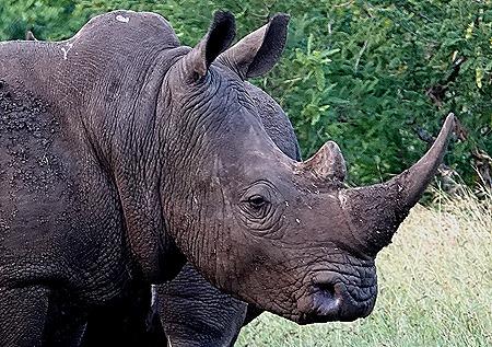 294. 010418Maputo, Mozambique & Kruger Nat Park, South Africa