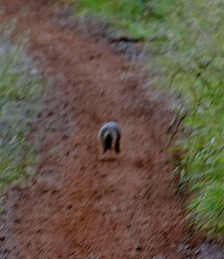 296. Kruger Nat Park, South Africa