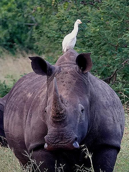 298. 010418Maputo, Mozambique & Kruger Nat Park, South Africa