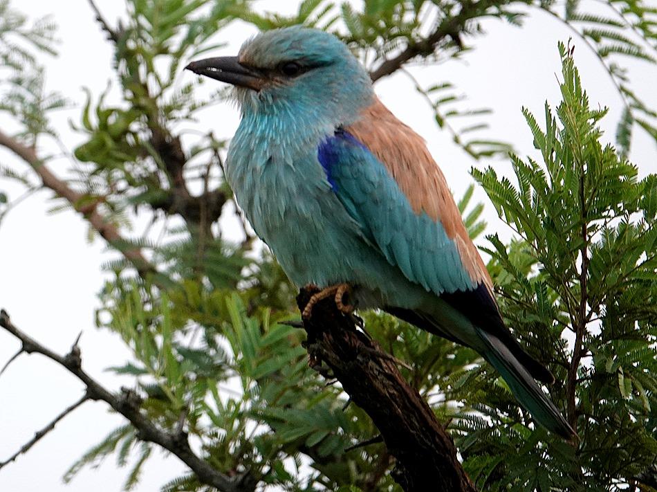 30. Kruger Nat Park, South Africa