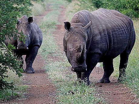 300. 010418Maputo, Mozambique & Kruger Nat Park, South Africa
