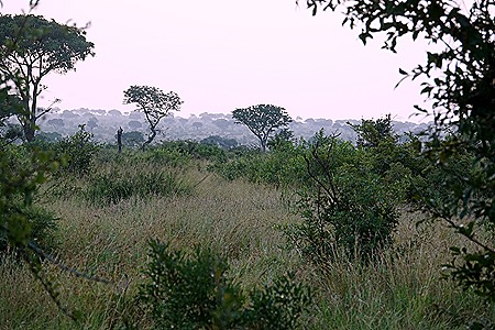 300. Kruger Nat Park, South Africa