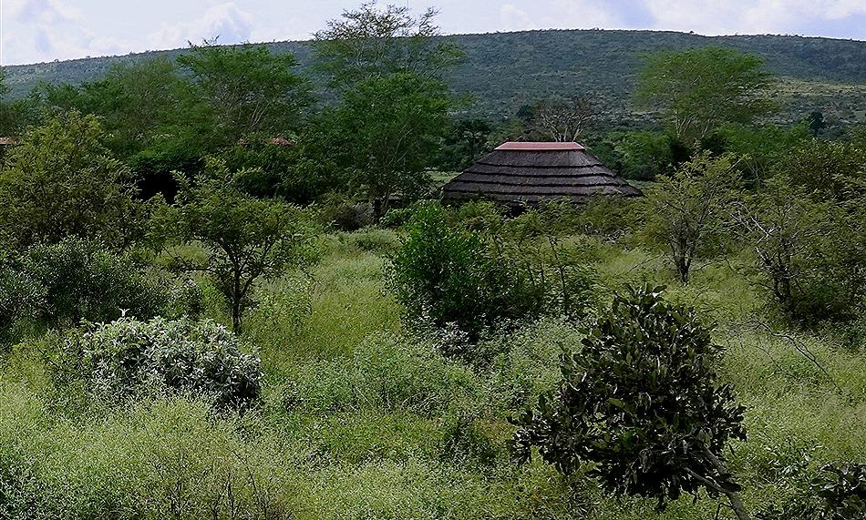 300a. Kruger Nat Park, South Africa_stitch