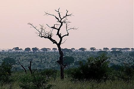 305. Kruger Nat Park, South Africa