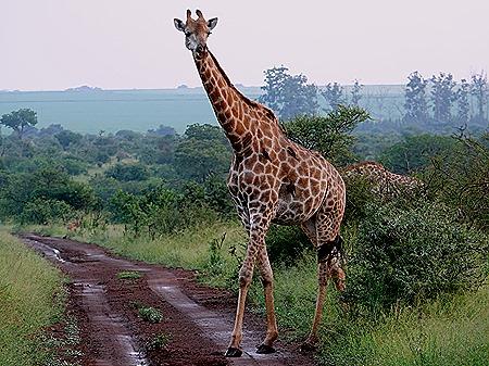 308. Kruger Nat Park, South Africa