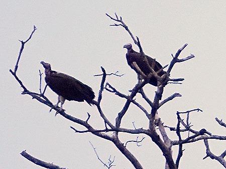 310. 010418Maputo, Mozambique & Kruger Nat Park, South Africa