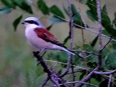 312. 010418Maputo, Mozambique & Kruger Nat Park, South Africa