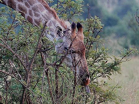 313. Kruger Nat Park, South Africa