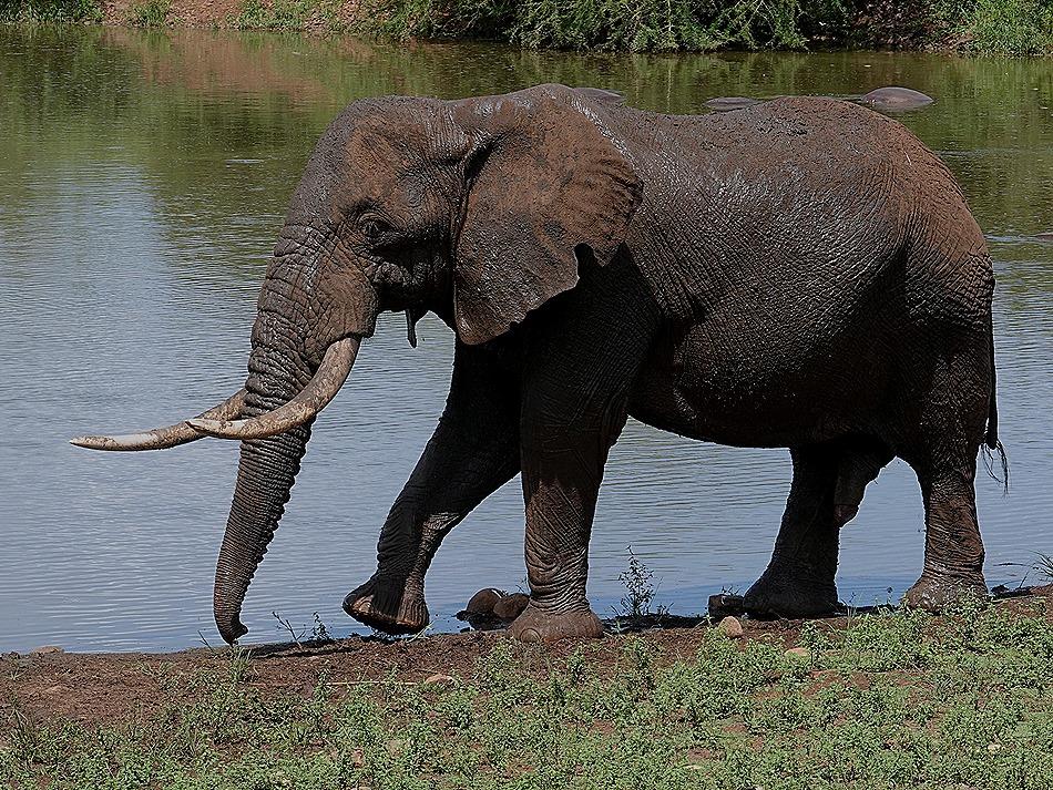 314. Kruger Nat Park, South Africa