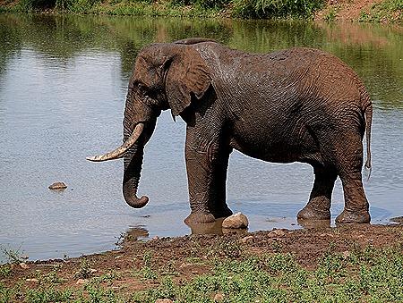 320. Kruger Nat Park, South Africa
