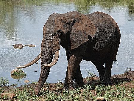 325. Kruger Nat Park, South Africa