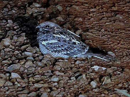 328. 010418Maputo, Mozambique & Kruger Nat Park, South Africa