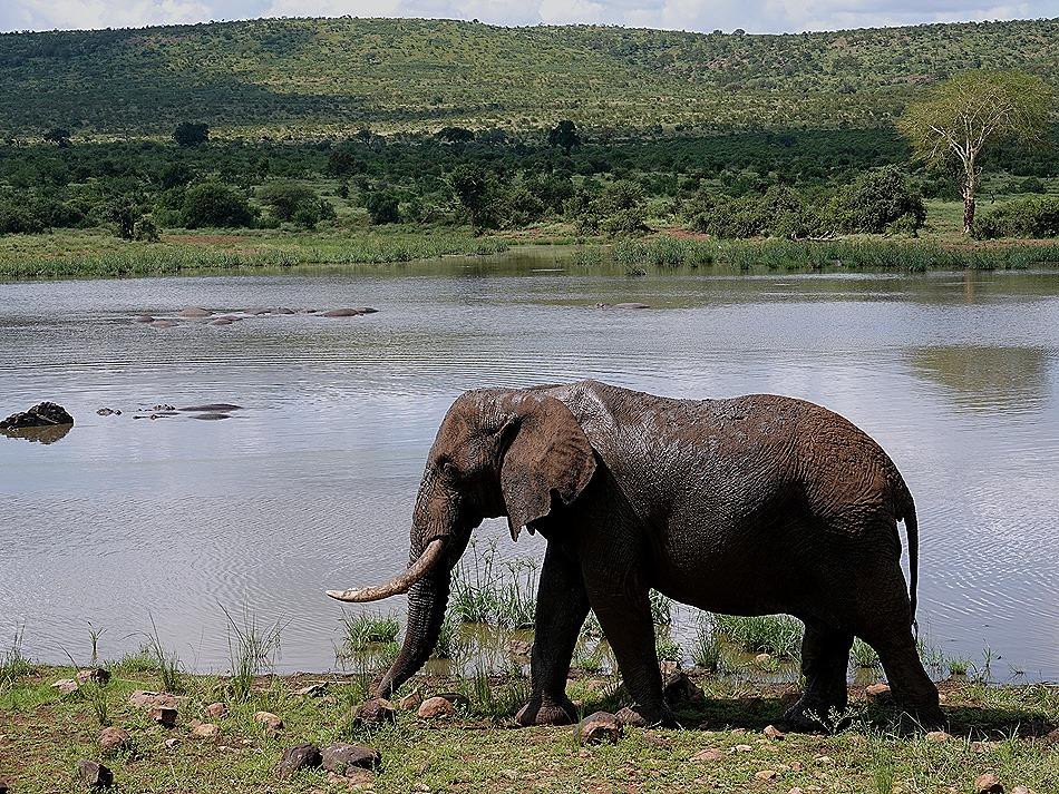 329. Kruger Nat Park, South Africa