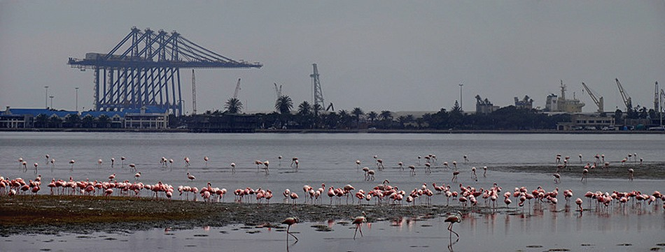 32a. Walvis Bay, Namibia080418_stitch